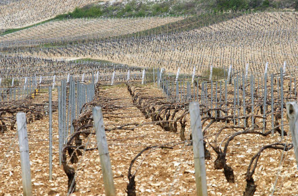 Vins de Chablis Bourgogne