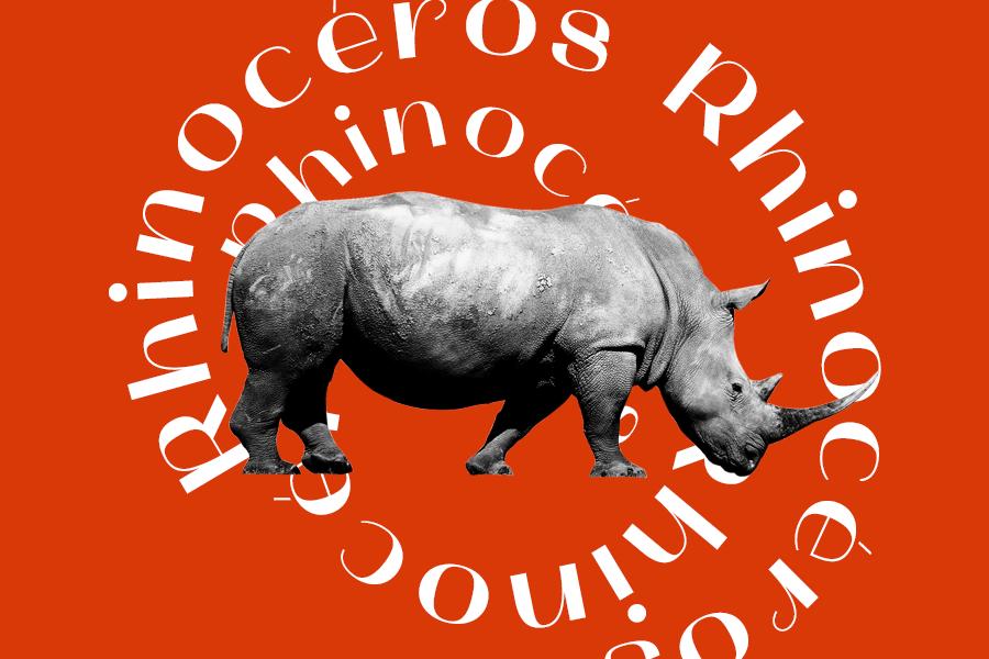 Rhinocéros bouillon bile cadet